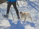 Snowshoeing and dog allowed :)