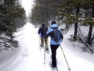 Snowshoe and cross country skiing trails in the forest